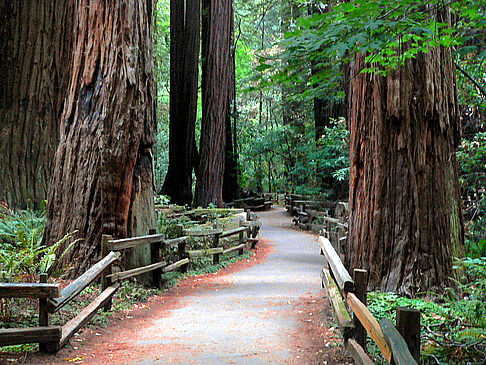 Muir Woods Ansicht Attraktion  in San Francisco