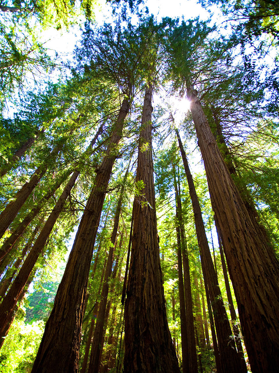 Fotos Muir Woods | San Francisco